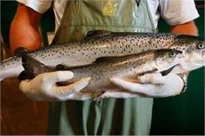 fda allows genetically modified salmon imports in the us