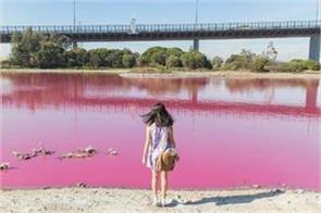 melbourne s lake became pink