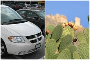 cars running from cactus juice