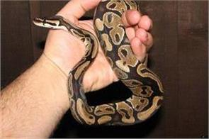 python travelled with woman from australia scotland