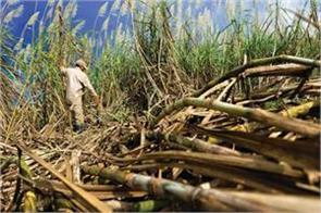 punjab cabinet gives nod to disburse rs 25 per qtl to cane growers