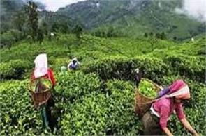 tea board hopes to strengthen tea prices