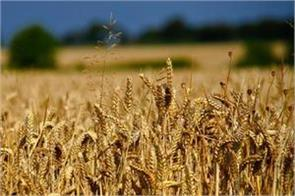 center gives relief in wheat procurement norms in punjab