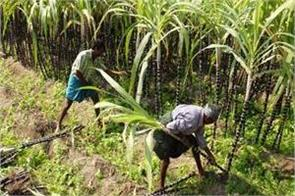 sugarcane farmer said now jai is not a farmer only jai jawan is left