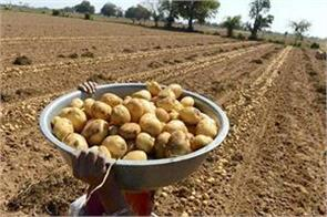 farmers of gujarat had to grow potato barking around the cutting court