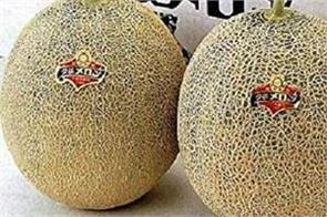 2 melons  sold for over 29 000 at auction in japan