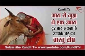vastu dosh related to cow