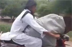 pakistani man rides motorcycle with a cow sitting in front