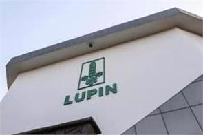 lupine s profits are two and a half times