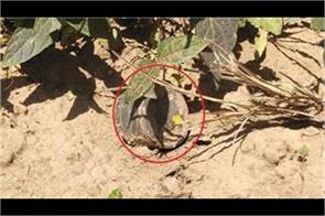 bsf found anti personnel mine in samba