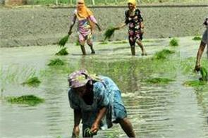 power demand in paddy season