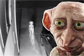 elf like creature caught on camera  is that dobby  asks internet