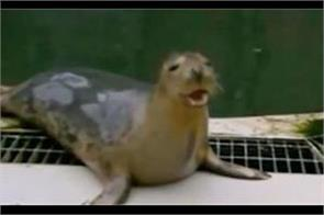 grey seal is singing the star wars theme video viral