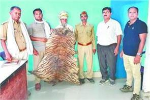 mathura arrested with the precious skins of chaita