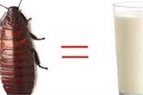 scientists think cockroach milk could be the next super food