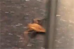 bat found on newyork subway train passengers shocked to see