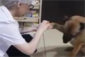 injured dog enters pharmacy for help viral video melts hearts