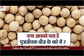 do you know about sonjivar seeds