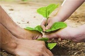 nbri air pollution himalaya iseb trees