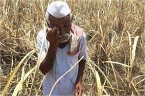 maharashtra farmers suicides bjp government