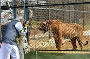 pm modi released report on world tiger day