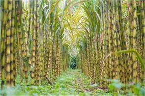 pipriach sugar mill will be first to produce ethanol from sugarcane juice