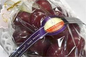 ruby roman grapes bunch sold for more than 7 lacs in japan