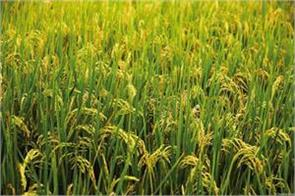 sowing of kharif crops decreased by 9 compared to last year