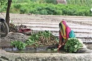 dangerous level metal found in vegetables grown by yamuna