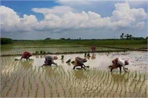 government is concerned about the reduction of sowing due to lack of rainfall