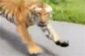 wayanad wildlife century viral video