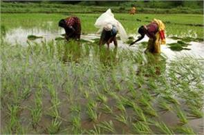 government gives decision to farmers gifts of 13 grains and msp