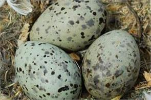 bird eggs communicate to each other and vibrate to warn