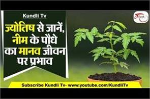neem plant effects on human life