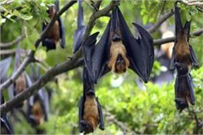 nipah virus is limited to just kerala central government