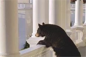 news usa online world new hampshire bear resort balcony
