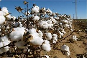 demand for extracting cotton pony stock at market value from cci