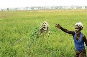 sowing will not stop due to monsoon government