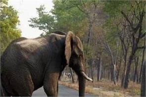 wild elephant attacked on elderly man