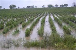 sowing of kharif crops decreased by 27 due to low rainfall