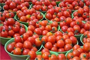 mother dairy to sell tomato at rs 40 kg