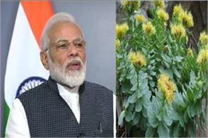 it s time that ladakh s medicinal plants get recognition in the world pm modi
