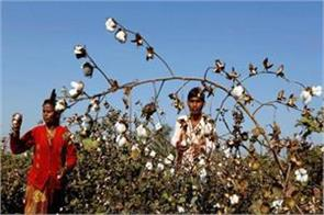great recession in yarn farmers may cry white gold