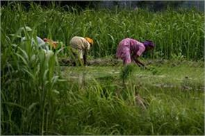 expecting bumper crop due to good monsoon demand for gold