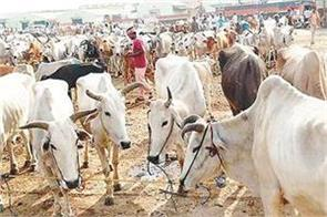 animal husbandry contributes significantly to the economy