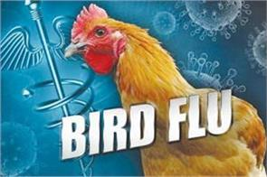 india declared bird flu free