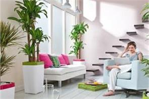 to increase positivity in the house plant these plants in this direction