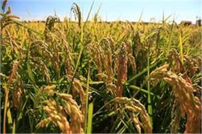 kharif crop situation better bumper production expected
