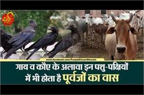 apart from cows and crows these animals also been worshiped in pitru paksha