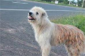 lost dog waits for 4 years by road his owner